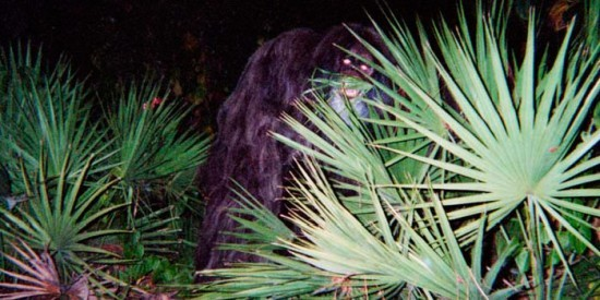 Skunk Ape Most Mysterious Pictures