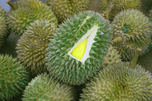 Durian - Rare Fruits
