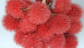 10 Rare Fruits in the World One Must Eat