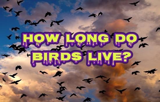 How Long Do Birds Live