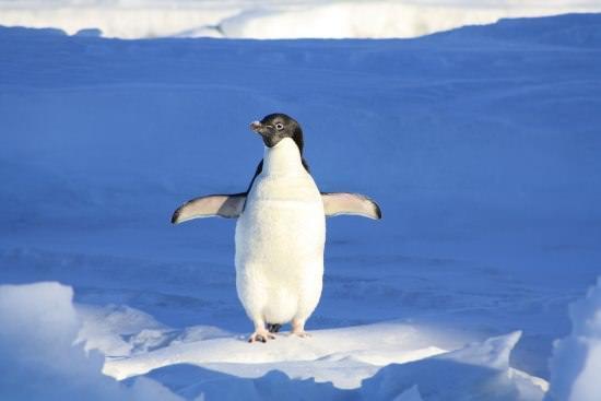 Penguin Different Types of Birds