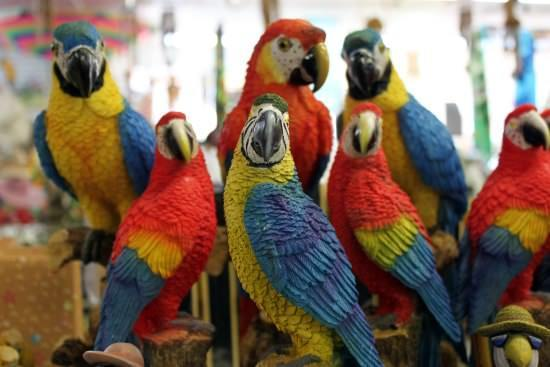 Parrots Different Types of Birds