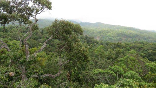 Daintree Rainforest Dangerous Forests