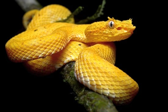 Beautiful Snakes