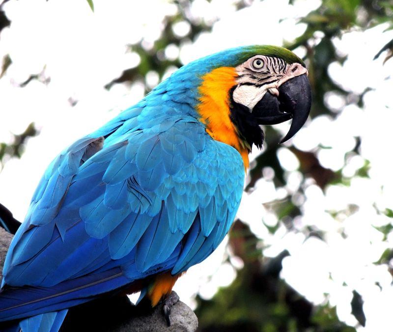 Macaws Long Living Animal